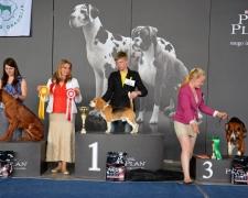 Biglis Dakaras laimi Kauno parodoje